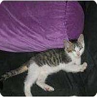 Adopt A Pet :: Shazam - Modesto, CA