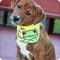 Adopt A Pet :: Redmond - Albany, NY