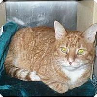 Adopt A Pet :: Alex - Colmar, PA