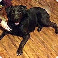 Adopt A Pet :: Khloe - Toledo, OH