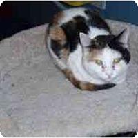 Adopt A Pet :: Penny - Hamburg, NY