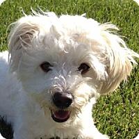 Adopt A Pet :: Oliver - La Costa, CA