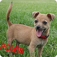 Adopt A Pet :: Howie - Brazil, IN