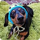 Adopt A Pet :: Jojo (special needs diabetic)