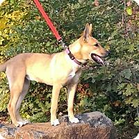Adopt A Pet :: Mykah (fostered in NC) - Cranston, RI