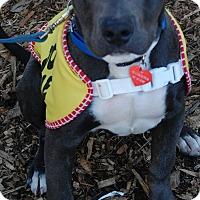 Adopt A Pet :: ARROW - Redondo Beach, CA