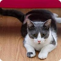 Adopt A Pet :: Brady - Frankenmuth, MI