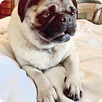 Adopt A Pet :: Patrick - Austin, TX