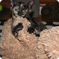 Adopt A Pet :: Winnie - Toms River, NJ