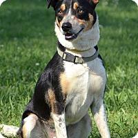 Adopt A Pet :: Mikey - Charlemont, MA