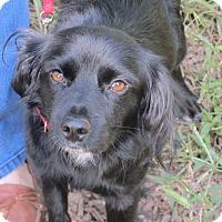 Adopt A Pet :: Brady - Allentown, PA