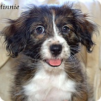 Adopt A Pet :: Minnie - Yuba City, CA