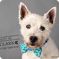 Adopt A Pet :: Clark-Pending Adoption - Omaha, NE
