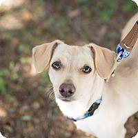 Adopt A Pet :: Ethel - West Hartford, CT