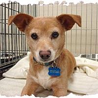 Adopt A Pet :: Dallas - Las Vegas, NV
