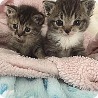 Adopt A Pet :: Hazel & Ollie - Island Park, NY
