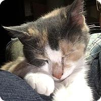Adopt A Pet :: HONEY - Evans, WV