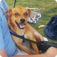 Adopt A Pet :: Stanley - Marietta, GA