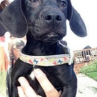Adopt A Pet :: Frank - Joliet, IL