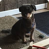 Adopt A Pet :: Benji - Nicholasville, KY