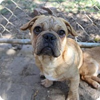 Adopt A Pet :: Hustle - Waco, TX