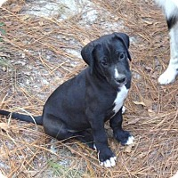 Adopt A Pet :: Buddy - Crestview, FL
