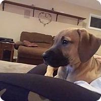 Adopt A Pet :: Junie - Morganville, NJ