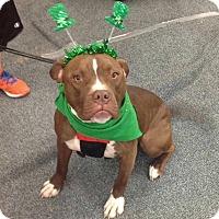 Adopt A Pet :: Tank - Wichita, KS