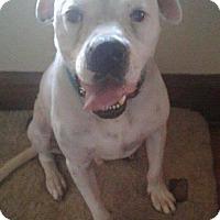 Adopt A Pet :: Merle - Brunswick, OH