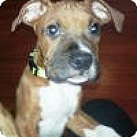 Adopt A Pet :: Zeus - North Haven, CT