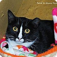 Adopt A Pet :: Mamie - Lincoln, NE