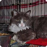 Adopt A Pet :: Huey - San Luis Obispo, CA
