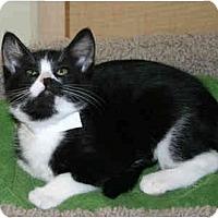 Adopt A Pet :: Princess Oreo - Irvine, CA