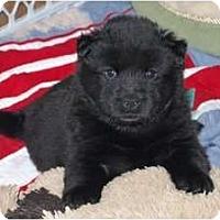 Adopt A Pet :: Paige - Minneola, FL