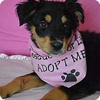 Adopt A Pet :: Lexie - Aurora, CO