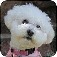 Adopt A Pet :: Charlize - La Costa, CA