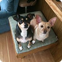 Adopt A Pet :: Chumley & Tanner - Medora, IN