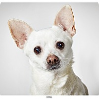 Adopt A Pet :: Minnie - New York, NY