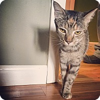 Adopt A Pet :: Amelia - Raleigh, NC