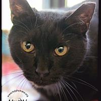Adopt A Pet :: Diamond Girl - Belton, MO