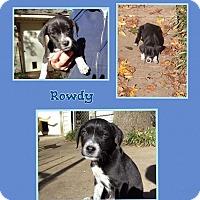 Adopt A Pet :: Rowdy meet me 12/11 - East Hartford, CT