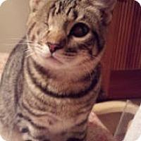 Adopt A Pet :: Squintz - Scottsdale, AZ