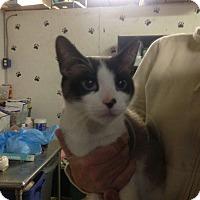 Adopt A Pet :: Annique - Trevose, PA