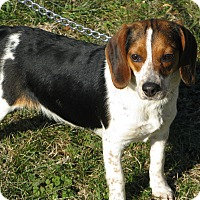Adopt A Pet :: Jill - Dumfries, VA