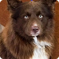 Adopt A Pet :: I'M ADOPTED Bear Wellman - Oswego, IL