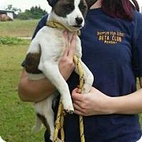 Adopt A Pet :: Jack - Thomaston, GA