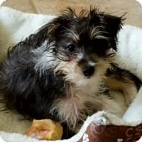Adopt A Pet :: Frida - Knoxville, TN