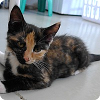 Adopt A Pet :: Patches - Manning, SC