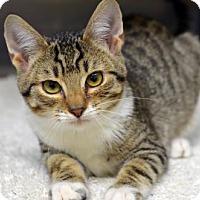 Adopt A Pet :: LeBron161090 - Atlanta, GA