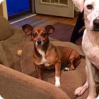 Adopt A Pet :: Tish - New Kensington, PA